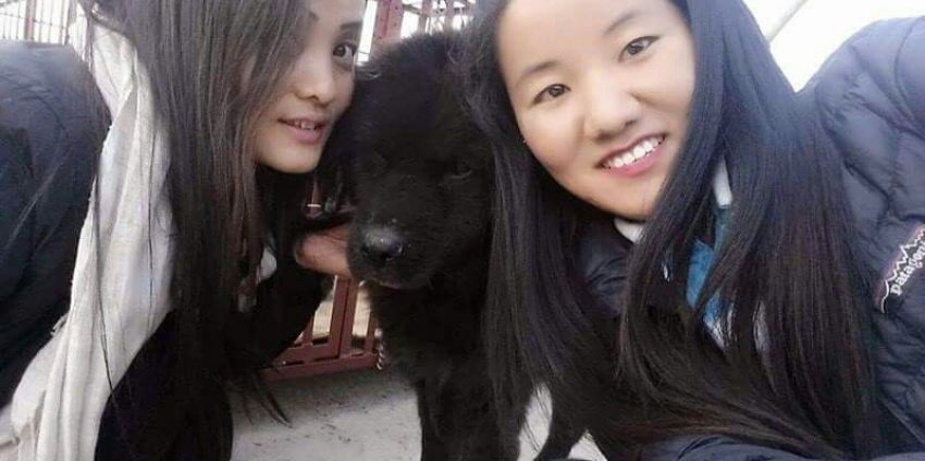 Second Chances for Nepali Street Dogs: Sneha's Care Foundation